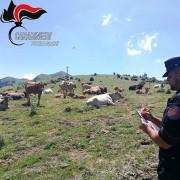 Carabinieri Forestali e indagini sui pascoli