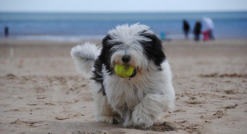 Animali in spiaggia: rimuovere i divieti! Il nostro appello all'ANCI