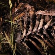 Il corpo in decomposizione di un animale morto