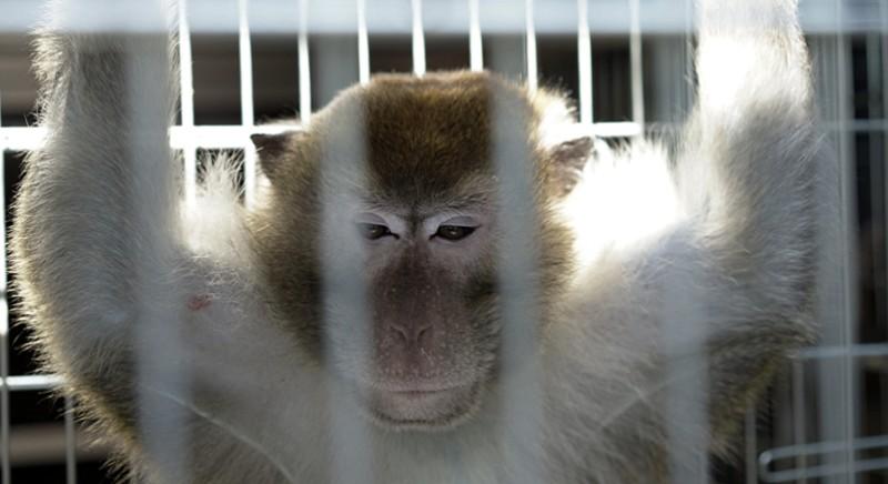 """Dossier: """"Sperimentazione animale e Covid-19, a che punto siamo realmente"""""""