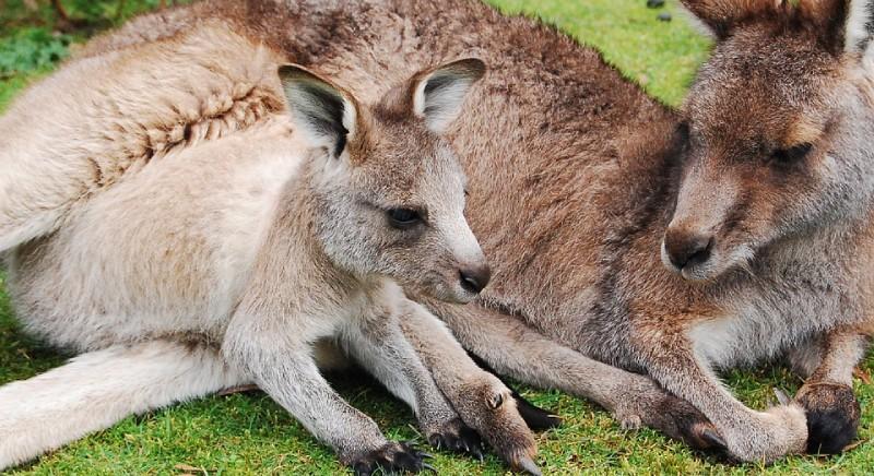 Good news! Prada will no longer use kangaroo leather