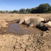 Miki si gode il fresco del fango