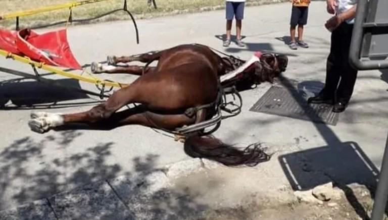 Reggia Caserta: stop carrozze, dopo morte cavallo esausto, sia definitivo