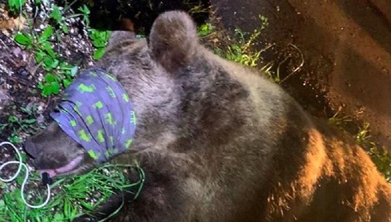 Cattura orso M57, decisione deleteria: attuare politiche di prevenzione!