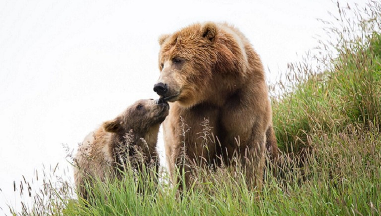 Convivere con gli orsi, in sicurezza: i consigli della nostra guida pratica