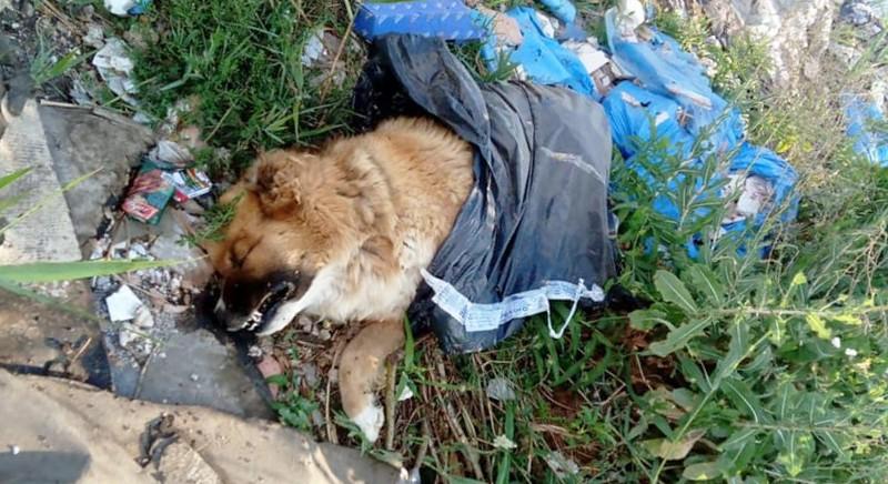 Cane avvelenato (foto dal web - www.lastampa.it/la-zampa)