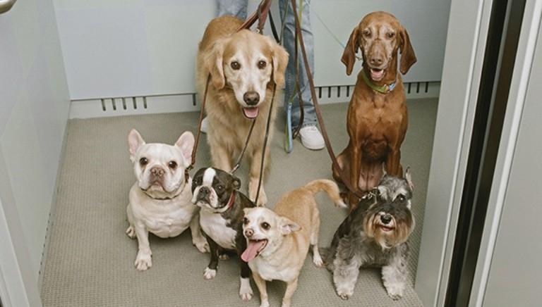 Ancona, divieto cani in ascensore spiaggia: Sindaco lo rimuova