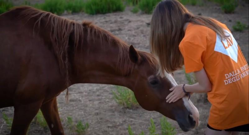 La nuova vita dei cavalli salvati da sfruttamento e maltrattamenti