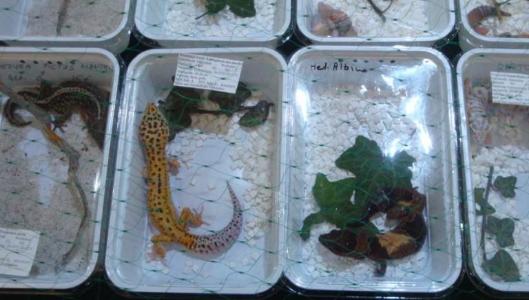 Covid: ignorati rischi di fiere e expo animali, wet market di casa nostra