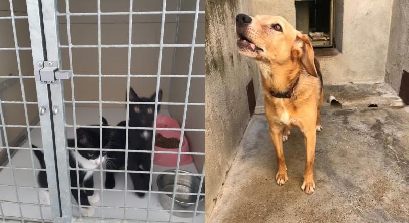 Gli animali, attualmente in quarantena presso strutture di accoglienza