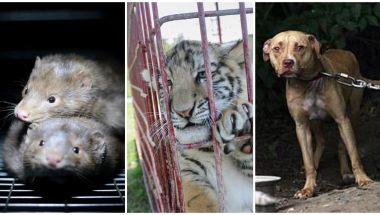 """Polonia, primo si a divieto allevamenti """"pellicce"""", e altre norme tutela animali"""