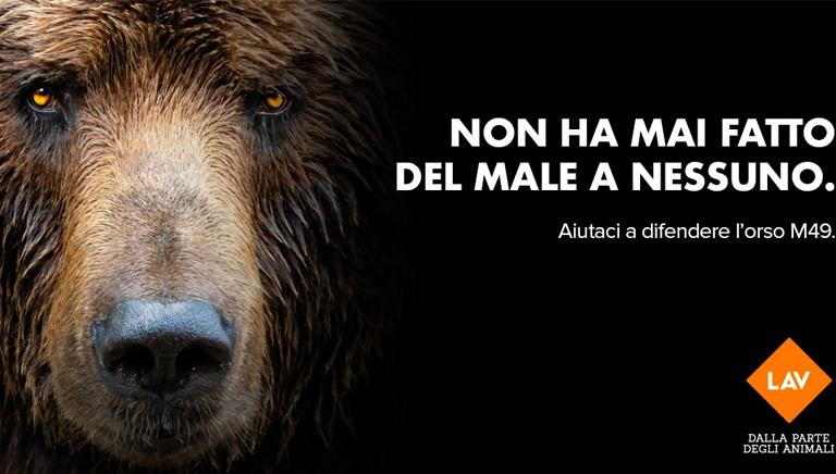 Se mi ami mi vuoi libero: sostieni le battaglie per difendere l'orso M49