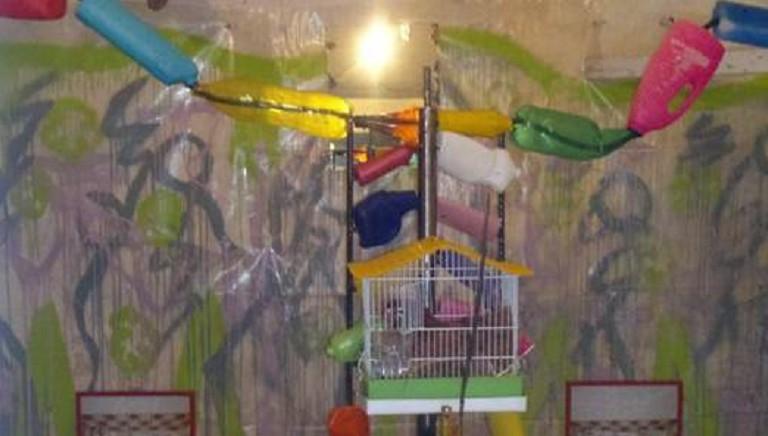 """Lecce, Gallina esposta per """"arte"""": storica condanna confermata in appello"""