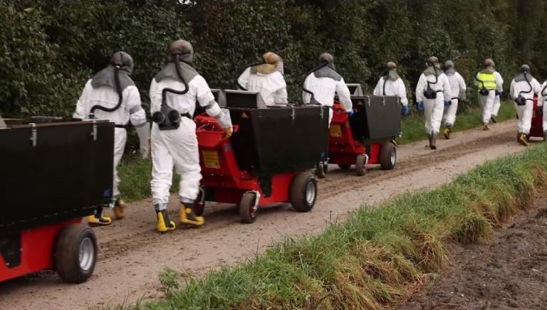 Inferno Danimarca: iniziata l'uccisione dei visoni colpiti da Sars-Cov2