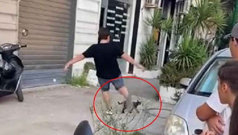 Giovani e violenza sul web: a 13 anni prende a calci gattino. Quale giustizia?