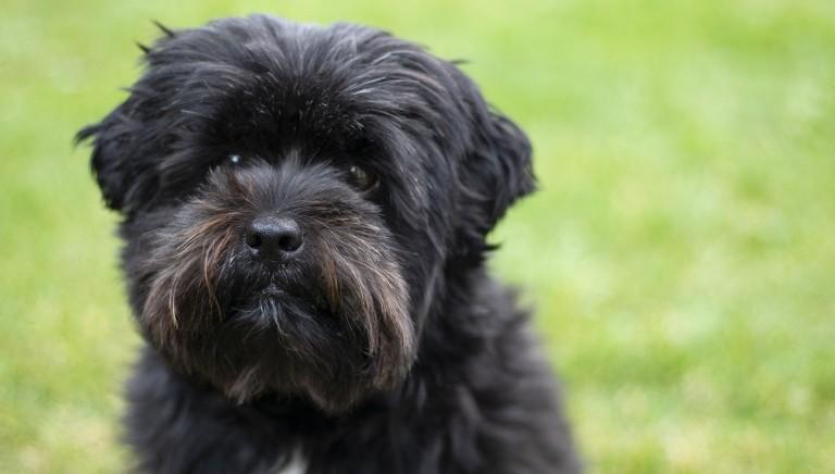 LAV Trento salva un cane che doveva andare all'asta. Non e' un oggetto!