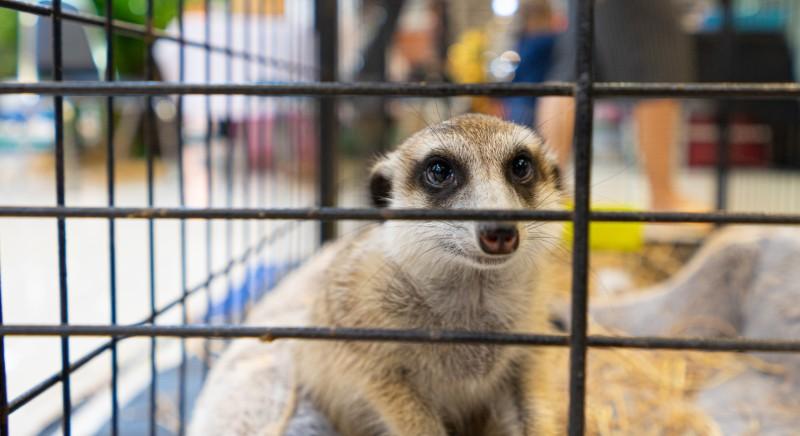 DPCM vieta anche fiere con animali: divieto sempre, non solo in emergenza