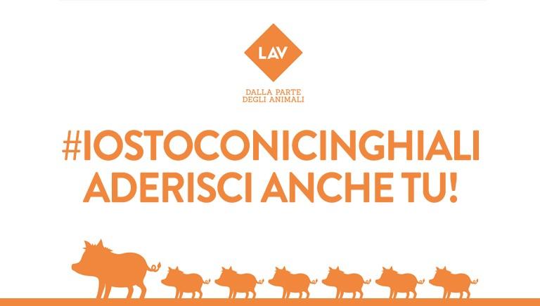 Aiutaci a chiedere giustizia per i cinghiali uccisi a Roma