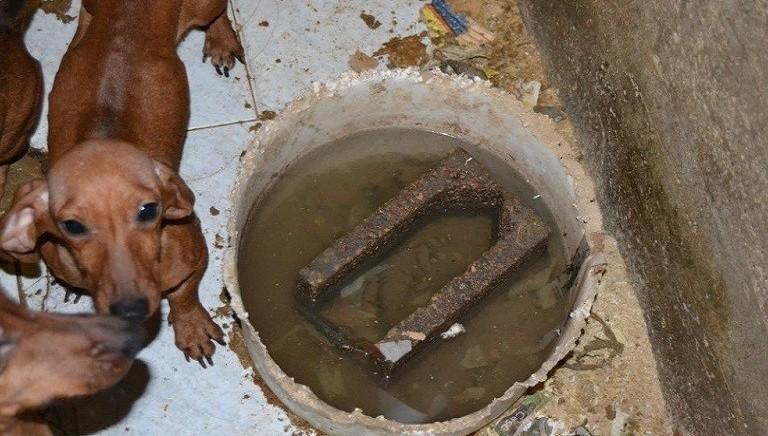 Verona: grazie a LAV, una casa per 326 cani sequestrati da allevamento
