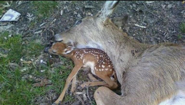 DCPM: da sabato stop caccia in zone rosse. Regioni rispettino disposizioni