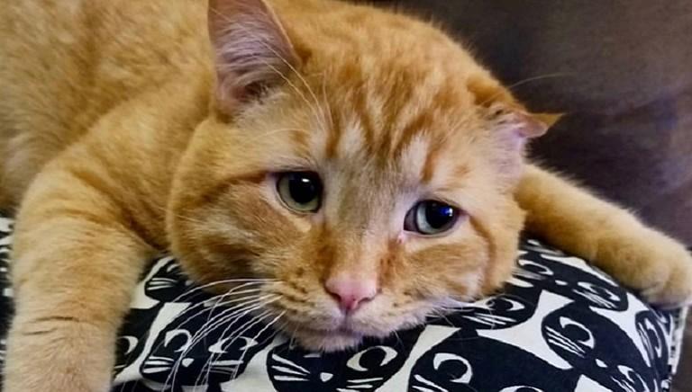 Maltrattamenti: gattina scuoiata viva a Treviso. I legali LAV gia' al lavoro