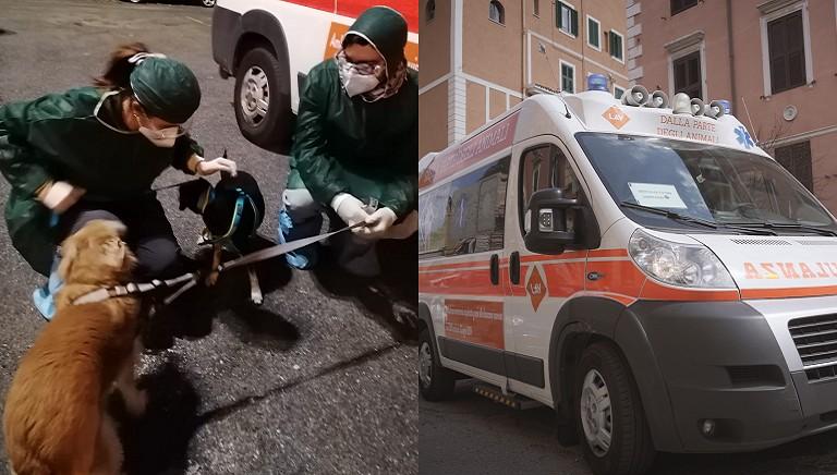 Isolata per Covid, senza aiuto per i suoi cani: trasferiti con la nostra ambulanza