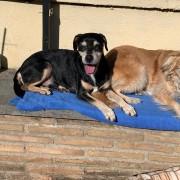 Rocky e Nina si godono il sole nella loro nuova sistemazione
