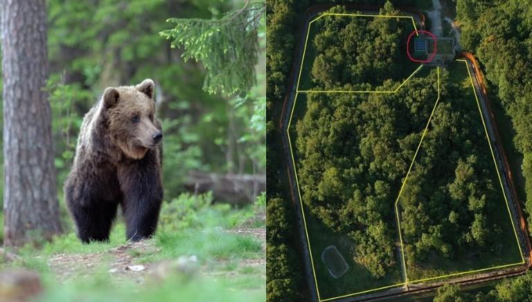Sciopero della fame per la liberta' degli orsi del Casteller