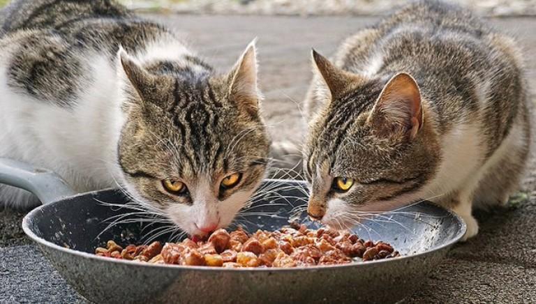 Un lieto fine per la colonia felina dell'Istituto Ispettori Polizia di Nettuno