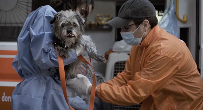 Storie dal front desk: il nostro aiuto agli animali nella nuova emergenza Covid