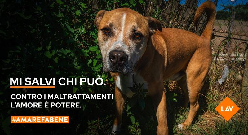 #MISALVICHIPUO': firma per pene piu' severe contro i maltrattamenti animali