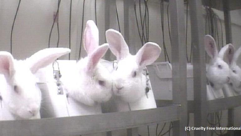 Test su animali per i cosmetici: il Parlamento UE difenda divieto vigente