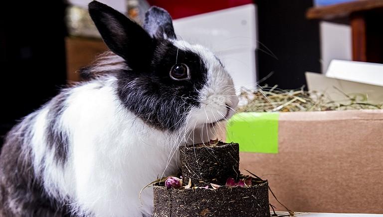 Grazie al nostro Front Desk, lieto fine con torta per la coniglietta Iris