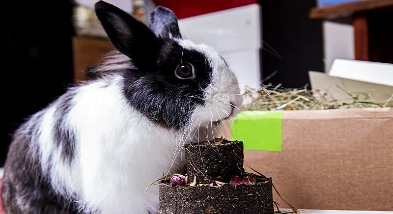 La coniglietta Iris