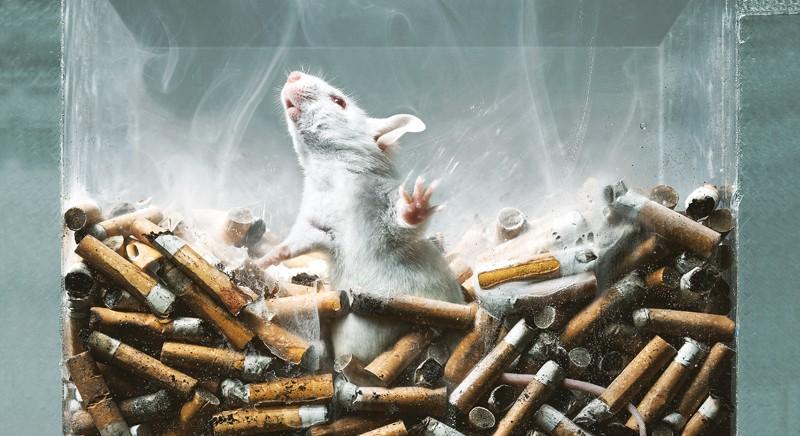 LAV a Speranza: stop rinvii divieto test animali su sostanze d'abuso