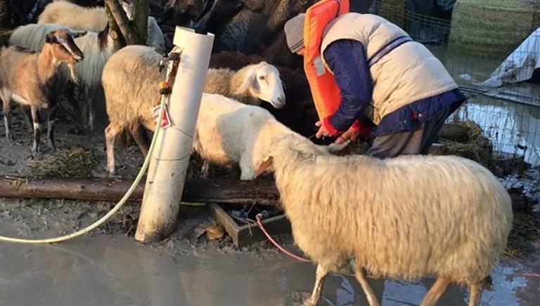 LAV in aiuto di animali e famiglie colpite dalla piena del fiume Panaro (Modena)