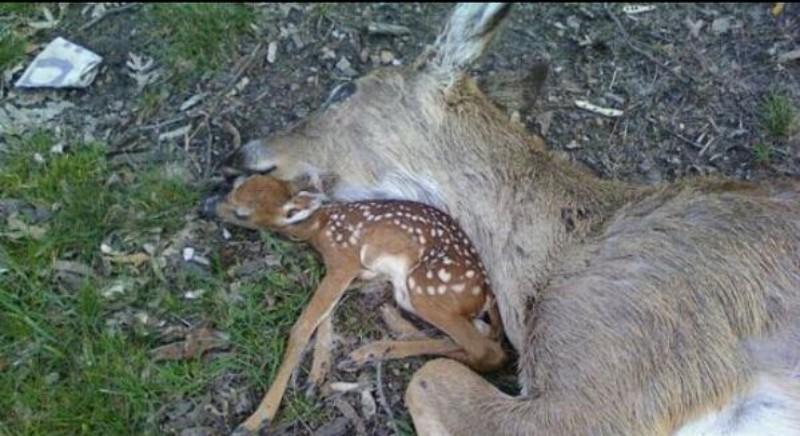 Covid e caccia: anche l'Abruzzo permette libera circolazione venatoria