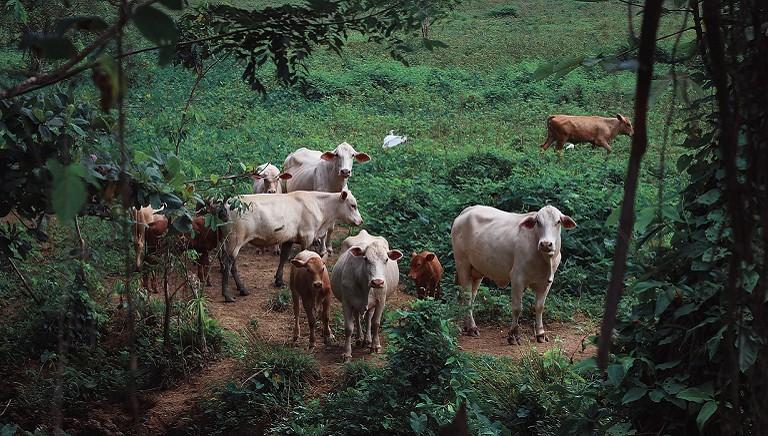 Ragusa: da LAV appello a Prefetto e denuncia per uccisione di bovini vaganti