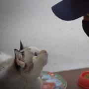 Una nostra volontaria con uno dei gatti della signora Adele