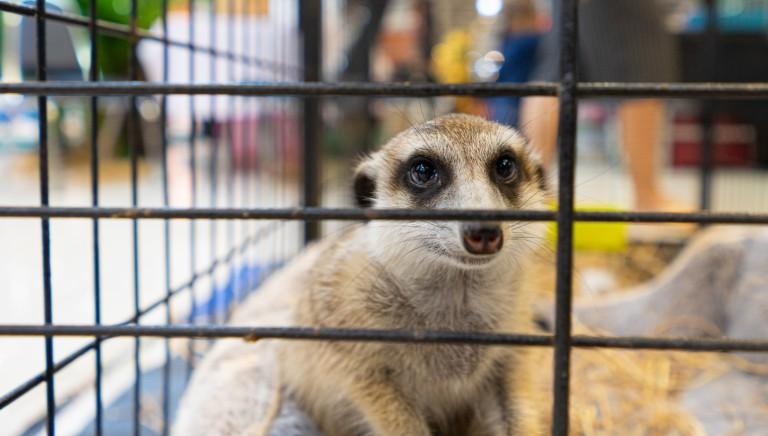 Animali esotici: a un passo dallo stop a commercio e detenzione