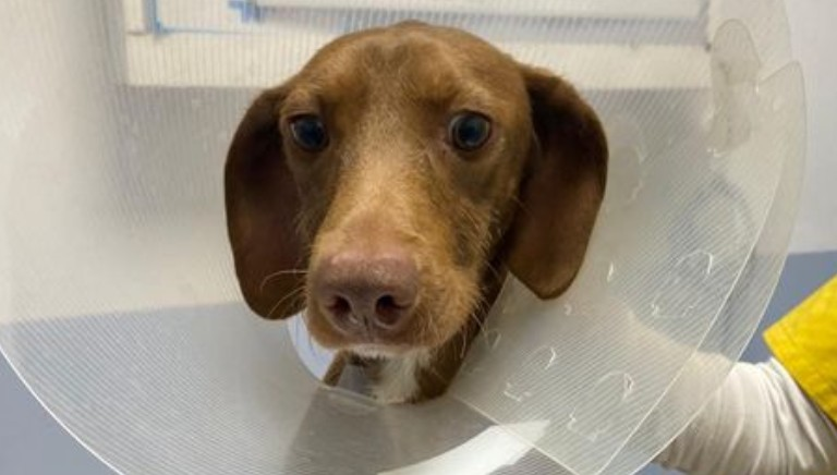 Cipollino: storia di un cane che ha ritrovato la speranza