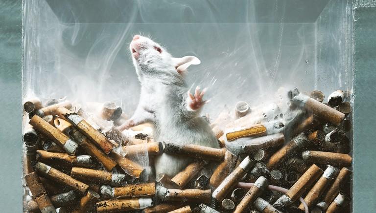 Sostanze d'abuso: ancora un altro anno di test su animali?