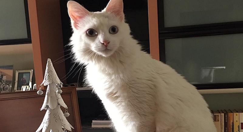 Il gatto Celestino, nella sua nuova casa