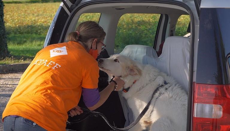 Nuovo DPCM: spostamenti necessari per animali sempre permessi