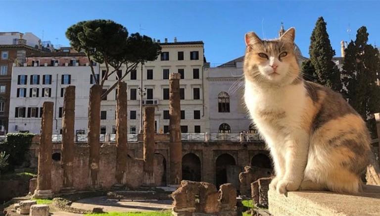 A Roma non c'e' trippa per gatti