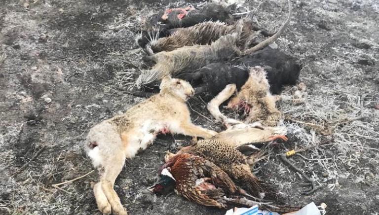 Disastro ambientale in provincia di Verona: avvelenati centinaia di animali