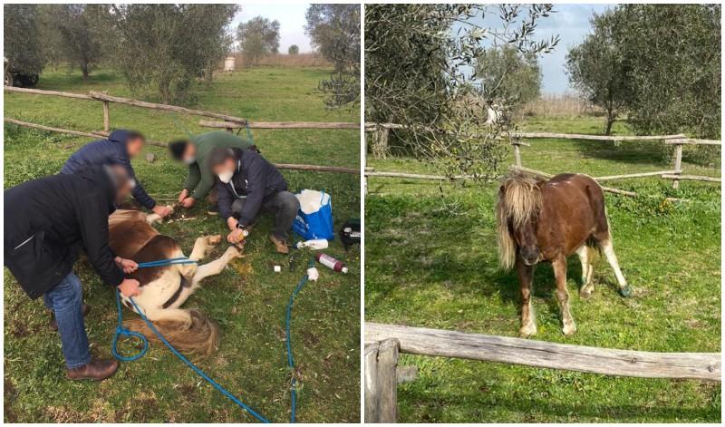 Pony ferito a Roma: soccorso dopo esposto LAV