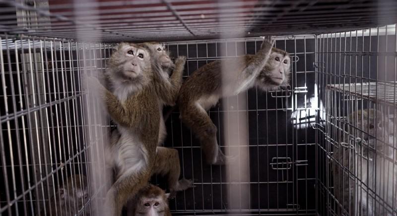 Disciplina protezione animali utilizzati a fini scientifici: il caso macachi di Parma
