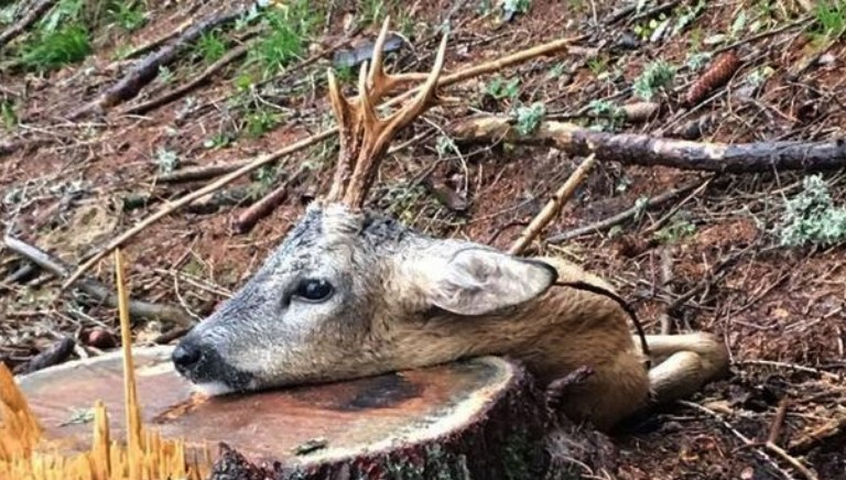 Chiude la stagione caccia, proseguita nonostante le norme anti-Covid