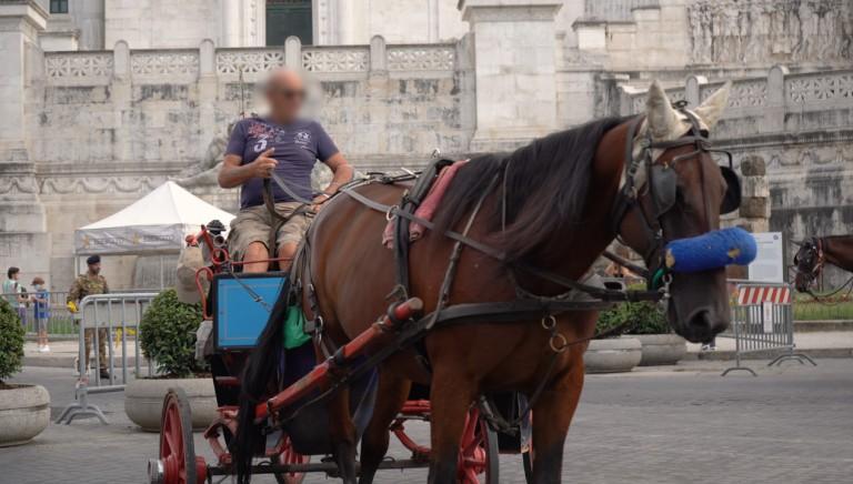 Botticelle: violazione nuovo Regolamento. Denunciamo vetturini